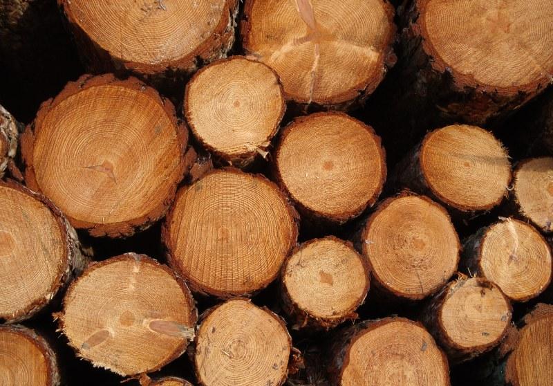 Nejčastěji používané druhy dřeva při výrobě nábytku